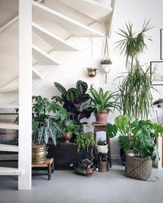 Plants purify air for us. Decorating living room with Indoor plants makes us feel more comfortable and relaxed. Indoor plants are those that can live with minimal or no sunlight. Here are some of the ways to decorate indoor plant in living rooms. Plantas Indoor, Jungle Decorations, Decoration Plante, Plants Are Friends, Interior Plants, Under Stairs, Green Life, Plant Decor, Houseplants