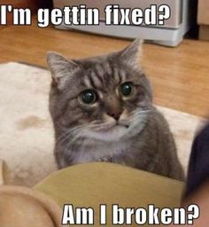 Daily Awww: Animals + captions = Awws and lols (28 photos) - cute-captions-25