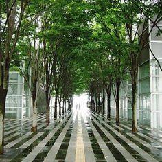Saitama sky forest plaza
