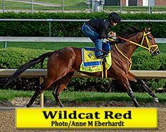 Wildcat Red