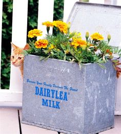 Simple rules for great container gardens