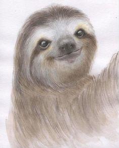 Sloth painting. Sloth watercolor. Sloth illustration. by madareli-- so sweet!