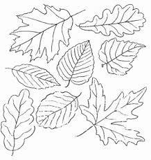 Resultado de imagen de dibuixos de fulles de la tardor per pintar