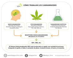 Que tipos de cannabinoides existen y como pueden funcionar en el cuerpo humano. Cannabis, Smoking Weed, Natural, Clinic, Medicine, Barcelona, Life, Smoke, Herbalism