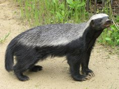 honey badger | It's been almost a year since the SEC seized Northern California SBA ...