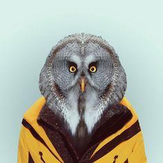 Great Gray Owl (Strix Nebulosa) Zoo Portraits by Yago Partal