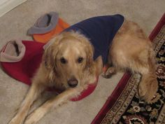 Tanner loves his reversible fleece jacket for our occasional cold days.
