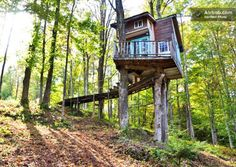 Fern Forest Treehouse