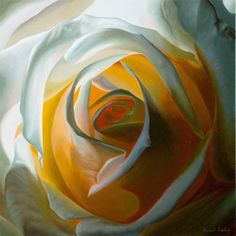 Inner light, signed limited edition print, from original oil painting, of white rose, by Vincent Keeling - Available at www.vincentkeeling.com