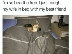 Here are 53 very funny memes of the day to make your laugh. Don't forget to share this hilarious meme pictures with your friends. Cute Funny Animals, Funny Cute, Funny Dogs, Hilarious, Funny Fails, Lol Funny, Funny Stuff, Funny Puppies, Dumb Jokes