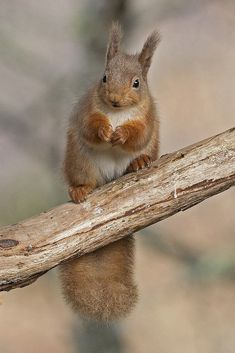 Scary Animals, Animals And Pets, Funny Animals, Cute Animals, Squirrel Pictures, Animal Pictures, Cute Squirrel, Secret Squirrel, Cute Bunny
