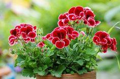 Recycling, Create, Flowers, Gardening, Ideas, Gardens, Hydrangeas, Plant, Compost