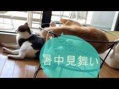 にゃんズからの暑中見舞い;猫おもしろ動画こむぎ&だいず