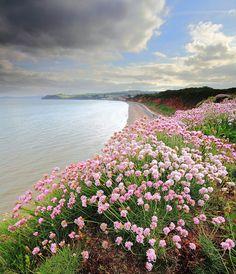 Flowers on top of Langstone rock looking towards Dawlish, Devon, UK