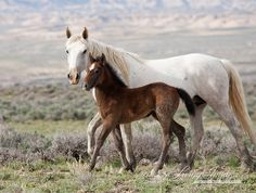 Mare and Foal in Step - Fine Art Wild Horse Photograph - Wild Horse - Adobe Town