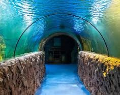 aquarium - Google zoeken