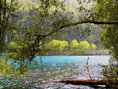 MIMOSEAR                  PAMPER:  MEU AMARGO RIO DOCE   Meu rio de águas cristalina...