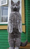 Котосущность