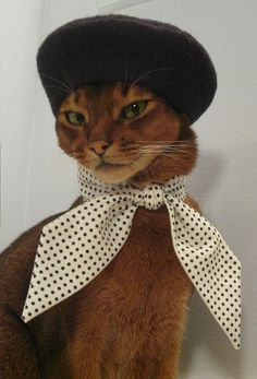 My cat wouldn't keep it on, but this kitten looks like a real sport about it. And very sophisticated, to boot.