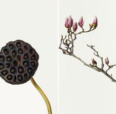 Takashi Tomo-Oke - Is een fotograaf uit Tokyo. Hij fotografeerd voornamelijk bloemen. Je ziet zowel botanische beeldspraak als Japanse tradities in zijn opvallende bloem portretten. Ik vind het knap dat de foto's zo clean gefotografeerd zijn dat het net een print lijkt.