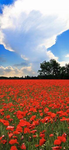 Red Poppies Field. Rosso è il colore dell' #Estate? Buongiorno dal #Friuli Venezia Giulia!
