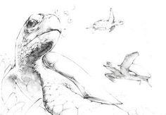 바다거북 스케치