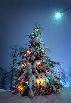 A Splash Of Christmas Cheer