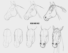 Drawing Tips how to draw a horse Horse Drawing Tutorial, Horse Pencil Drawing, Horse Drawings, Pencil Art Drawings, Art Drawings Sketches, Animal Drawings, Horse Head Drawing, Horse Art, Horse Horse