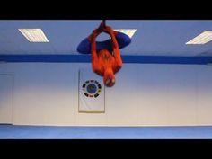 Taekwondo Spiderman [video] - http://www.2tout2rien.fr/taekwondo-spiderman-video/