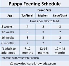 Save This Puppy Feeding Schedule As A Guide Of How Often To Feed Your And