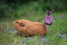 They called me a hamster once too often, I just can't take it anymore. I'm leaving!