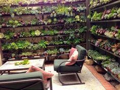 Great Cactus Plant Store