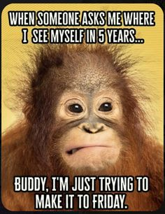 The Five-Year Future isnt meant to be intimidating. We are here to help you fin - Monkeys Funny - The Five-Year Future isnt meant to be intimidating. We are here to help you find out where youre going. Andwere just trying to make it to Friday too! Funny Monkey Memes, Funny Friday Memes, Its Friday Quotes, Funny Jokes, Memes Humor, Weekend Quotes, Monday Memes, Funny Friday Humor, Thursday Quotes