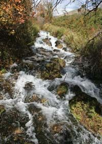 Cascade Springs is a refreshing oasis of lush vegetation, inviting pools, and cascading waterfalls located within the Uinta National Forest in the Wasatch Range, east of American Fork Canyon and west of Wasatch Mountain State Park.