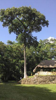 Ruinas mayas de Bonampack chiapas