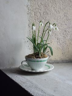 French Teacup Planter // Upcycled Vintage Ceramic Flower or Succulent Planter for Spring by FrenchAtticFinds on Etsy https://www.etsy.com/listing/219113206/french-teacup-planter-upcycled-vintage