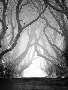 Dark Hedges- Ireland