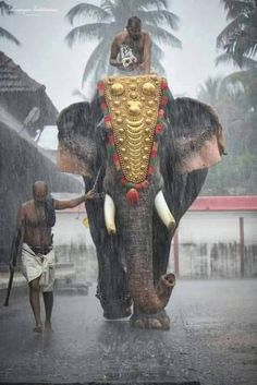 An Elephant in Kerala, India.You can find incredible india and more on our website.An Elephant in Kerala, India. Elephant Photography, Nature Photography, Travel Photography, Levitation Photography, Photography Photos, Kerala Travel, India Travel, Tourism India, Kerala India