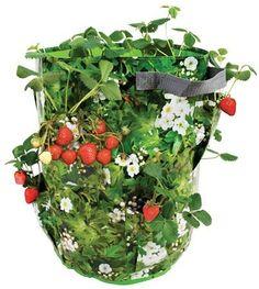 Bolsa para cultivar fresas y hierbas
