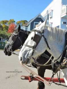 Mackinac Island Is Very Pet Friendly And Horse Lovers Are In Luck Too Pettravel Dogfriendly Michiga Michigan Travel Mackinac Island Pet Friendly Vacations
