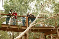 Unlike a zoo, the Koala Conservation Centre is really unique as visitors get the chance to see these magnificent creatures in their natural habitat, living as they would in the wild.