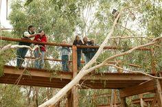 http://www.visitphillipisland.com/listing/koala-conservation-centre/