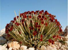 Hermosas flores nacidas entre las rocas