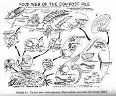 Compost: Food web of the compost pile (NRC, 1981a) from