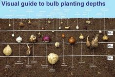 Bigger picture to show depth for planting bulbs - great idea and help