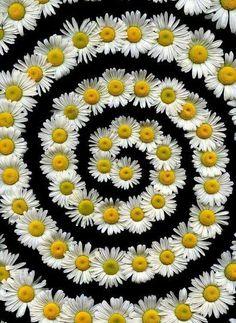 a daisy wheel:) Rangoli Designs Flower, Rangoli Designs Diwali, Flower Rangoli, Flower Designs, Rangoli Ideas, Festival Decorations, Flower Decorations, Pookalam Design, Housewarming Decorations