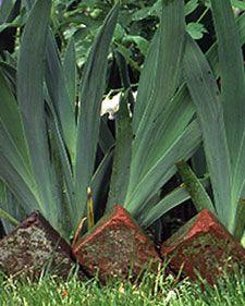 Garden Edging - Martha Stewart Home & Garden