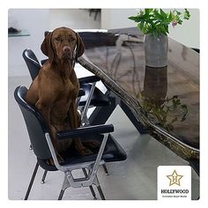 Herkes ahşap sever. Sevimli dostlarımız da dahil  | Everybody loves wood. Also our pets too #wood #woodentable #glazed #liveedgetable #slabtable #woodworking #woodwork #decoration #lifestyle #pets #cat #dog #polished #varnish #walnut #chic #furniture #luxury #hollywoodtable #instadaily #instalike #istanbul #instamood #instawood #like4like #follow4follow