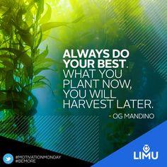#leadership #motivation #success #quote #quotes #garyraser #garyjraser #ogmandino #limu #teamlimu #limunation #fucoidan #bemore