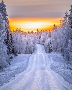 Winter sunset nature photography - A sunset is never the exact same. Instead of relying upon the camera's auto mode it is an ideal time to switch you. Winter Forest, Winter Magic, Winter Snow, Winter Christmas, Winter Photography, Landscape Photography, Nature Photography, Interior Photography, Winter Sunset